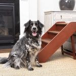Top 10 Best Dog Steps in 2020 - Reviews Best Guide