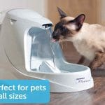 Top 10 Best Pet Fountain in 2019 - Reviews Best Guide