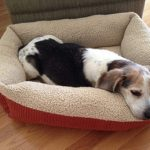 Top 10 Best Heated Dog Bed in 2020 | Great Product Review